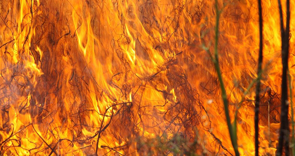 Risk för gräsbränder